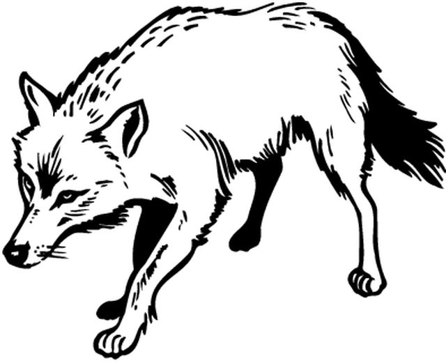 Coloriages animaux animaux sauvages - Coloriage animaux sauvages ...