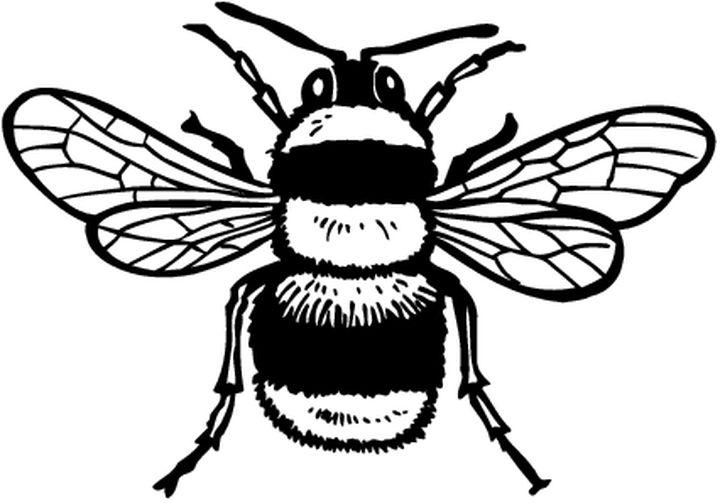 Coloriages animaux abeilles - Abeille coloriage ...
